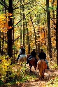 HorsebackFall